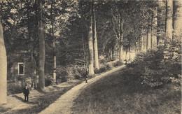 TONGRES- TONGEREN - Promenade Du Beukenberg - N'a Pas Circulé - Tongeren