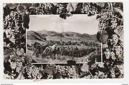 Rhénanie Palatinat MAIKAMMER ALSTERWEILER En 1967 Vin Vignes Vendanges Chevaux - Autres