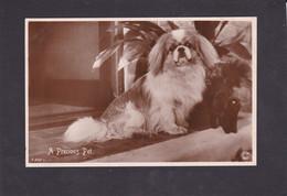Dog Card -   A Precious Pet.     RPPC. - Perros