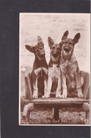 Dog Card -  Three Good Pals.    RPPC. - Perros