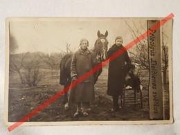 Photo D'époque. Original. Des Filles, Un Cheval Et Un Chien. La Lettonie D'avant-guerre - Gegenstände