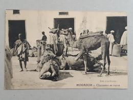 Maroc - Mogador - Chameaux Au Repos ... Lot440 . - Altri
