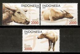 Indonesia 2009 / Mammals Ox MNH Mamíferos Buey Säugetiere / Cu15833  22-41 - Unclassified