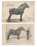Chaumes En Brie - René Michel - Quêteur  + 1 Carte Photo Sans Légende - Horses