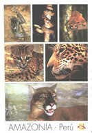 Amazonia:Peru, Monkey, Snake, Wild Cat, Jaguar, Mountain Lion - Other