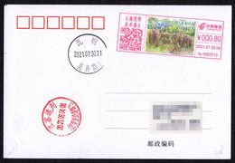 China KunMing Postage Machine Meter On Postcard:Animal Kingdom,beautiful Yunnan---Asian Elephants - Briefe U. Dokumente