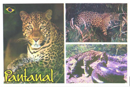 Jaguar, Panthera Onca, Snake - Other