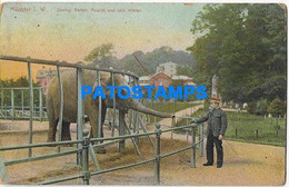 167356 GERMANY MÜNSTER GARDEN ZOO ELEPHANT SPOTTED POSTAL POSTCARD - Unclassified
