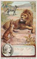 1040 - CHROMO CACAO PUR HOLLANDAIS BENSDORP AMSTERDAM HOLLANDE . LE LION ET LE LIEVRE . SCANS - Non Classificati