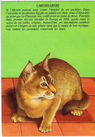 """Chat """" Abyssin Lièvre """", Illustration Jean-Marc Pariselle - Katten"""