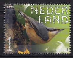 Nederland - Beleef De Natuur - 16 Augustus 2021 - Landgoed Haarzuilens - Boomklever - Sitta Europaea - MNH - Sperlingsvögel & Singvögel
