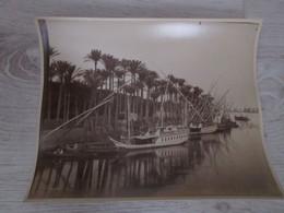 PHOTO ANCIENNE 29 X23 - EGYPTE - Palmiers Au Bord Du Nil Collée Sur Carton - Alte (vor 1900)