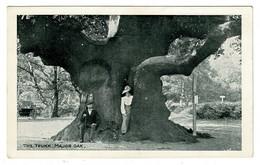 Ref 1493 - Early Postcard - The Major Oak Trunk Edwinstowe Sherwood Forest Nottinghamshire - Altri