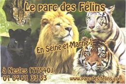 Black Panther, Serval, Lion, Albino Tiger, Tiger - Other