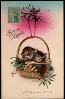 2 Chats  - Cats -katze  -  Poesjes In Mand - Chats