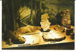 Montceau-les-Mines - Musée Des Fossiles - Montceau Les Mines
