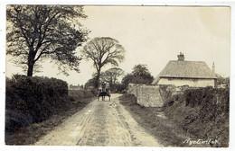 Nyetimber - Bognor Regis - Sussex - Vieuw - Attelage - Carte Photo - Bognor Regis