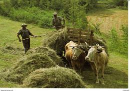Agriculture Fenaison Dans Nos Campagnes N°2041 Attelage Vaches Ou Boeufs Voiture à Foin - Cultivation