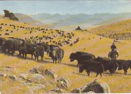 97821- MONGOLIAN LANDSCAPE, YAKS - Mongolia