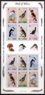 5 G109 Belize 1980 Birds Oiseaux Aves M/s 12v Mnh Nsc - Sin Clasificación