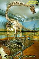 Carte Postale, Animaux Prehistoriques, Jurassic Dinosaurs, Spinophorosaurus Nigeriensis - Altri