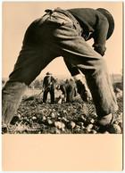"""Albert MONIER - """"Premier Plan"""" - Une Des Meilleures Photographies De MONIER - 1937  - Voir Scan - Monier"""
