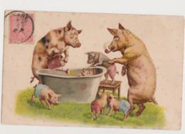 Carte Fantaisie Dessinée / Famille Cochons Humanisés : L'heure Du Bain - Pigs