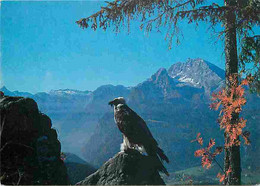 Animaux - Oiseaux - Espèce à Définir - Lâmmergeier Mit Watzmann - Nationalpark Kônigssee - Rapaces - CPM - Voir Scans Re - Vogels