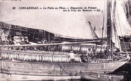 29 - Finistere -  CONCARNEAU - La Peche Au Thon - Disposition Du Poisson Sur Le Pont Des Bateaux - Concarneau