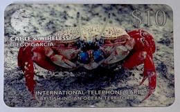 Red Crab - DG26 - Diego-Garcia