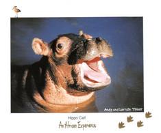 (YY 15) Hippo Calf / Bébee Hippopotame - Hippopotamuses