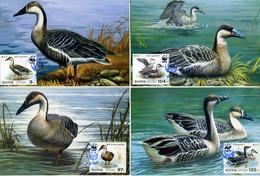 2004 North Korea, Fauna, Birds, Ducks, WWF, 4 Maximum Cards - Maximum Cards