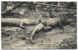 Bruxelles Exposition - L'Incendie Des 14-15 Août 1910 - Bruxelles-Kermesse - Deux Victimes Les Crocodiles De Pernelet - Universal Exhibitions