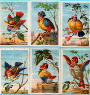 Série De 6 Chromo Maison Modèle Costumes Et Confections Pour Dames. Grotesque! Oiseaux à Visage Humain. - Other