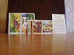 Lot Chromos Images Vignettes Chicorée Van Thiegem *** Faune Du Congo *** - Sammelbilderalben & Katalogue