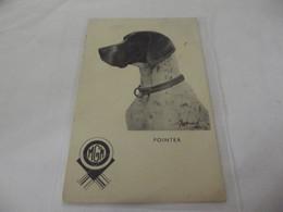 M.G.M POINTER ,CHIEN - Hunde