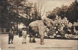 ANVERS-ANTWERPEN - Jardin Zoologique - Promenade De L'Eléphant - Antwerpen
