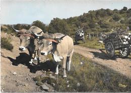 Aubrac Auvergne Touristique Attelage - Autres Communes