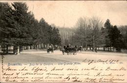 België - Bruxelles Brussel - Bois De La Cambre Une Grande Allee - 1904 - Unclassified