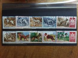 SAN MARINO 1956 - Razze Canine Nn. 439/448 Timbrati + Spese Postali - Used Stamps