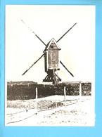 Putte N-Br Molen Foto/repro ML3087 - Windmills