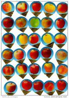 Opercules De Creme à Café, KRD Suisse, Série  1100; Complète; Pommes - Milk Tops (Milk Lids)