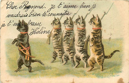 Chats Chatons Chat , * 431 72 - Gatos