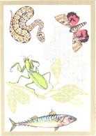 A.M.Sementsov-Ogievski:Snake, Butterfly, Grasshopper, Fish, 1988 - Other