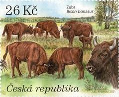 1127 Czech Republic Milovice 2021 Wisent European Bison - Kühe