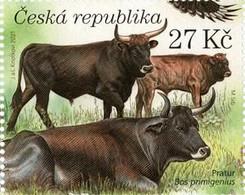 1128 Czech Republic Milovice 2021 Bos Primigenius - Kühe
