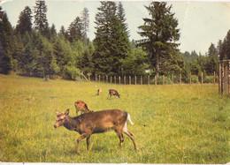 Huo-  25 Doubs  Cpsm  Env. De LEVIER - Autres Communes