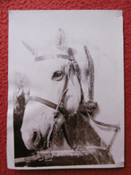 CAMARGUE CHEVAL MANADE PHOTO 18 X 13 Cm - Altri