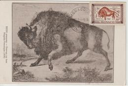 Monaco Carte Maximum 1949 Bison 331 - Maximum Cards
