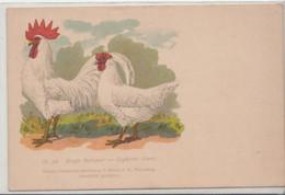 Coq Et Poule-WeiBe Italiener-Leghorns Blancs - Birds